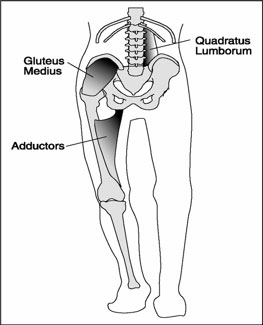 m quadratus lumborum